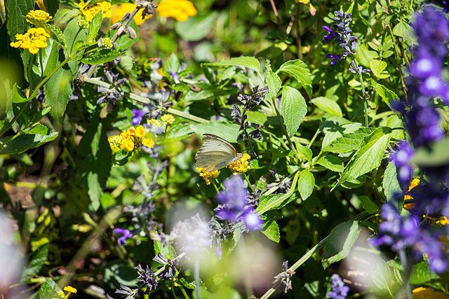 Plant pollinator gardens