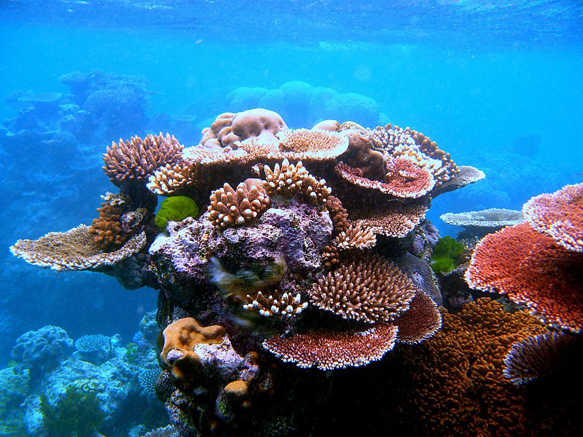 Coral_Outcrop_Flynn_Reef at risk of dying altogether