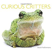 curious_critters.jpg