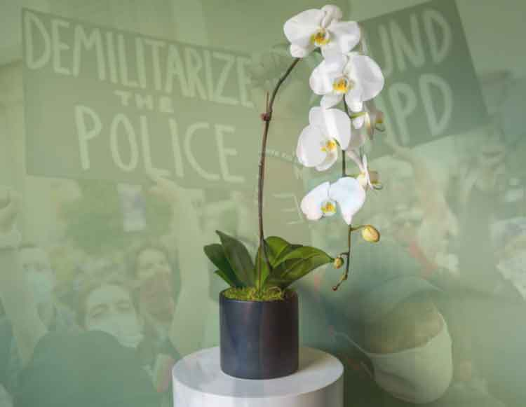 A flowering orchid set in front of a picture of protesters carrying a Demilitarize the Police sign
