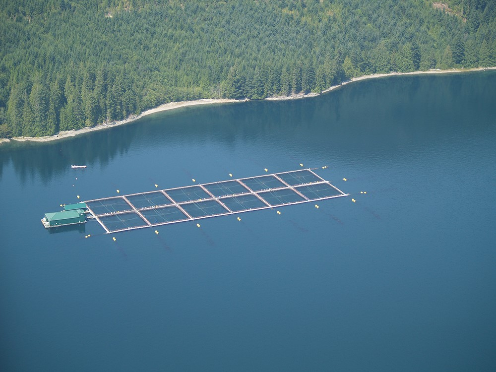 Salmon_Farms.jpg