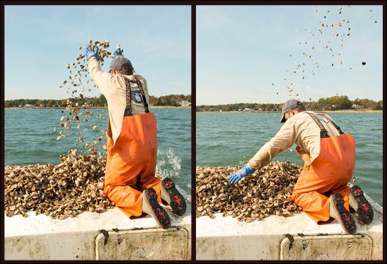 oyster_diptychnew.jpg