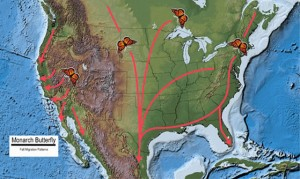 Monarch fall migration map