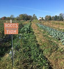 Roots_Farm_1.jpg
