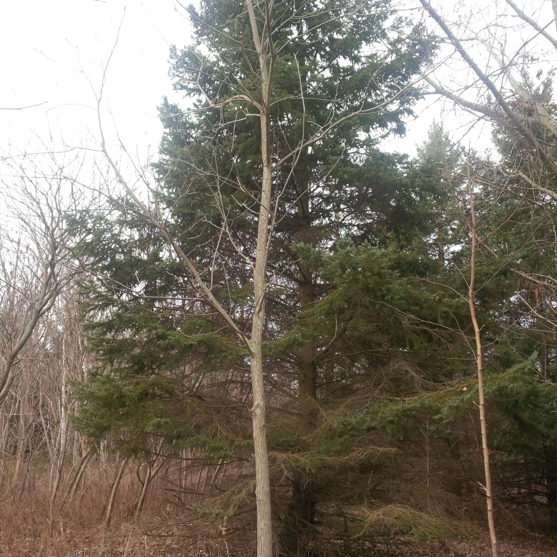 Tree_Hike_2.jpg