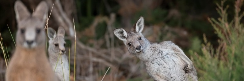 curious_roo_header2.jpg
