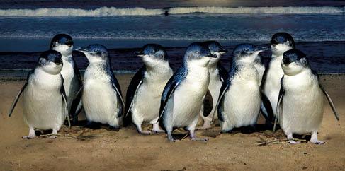 Penguins_medium.jpg