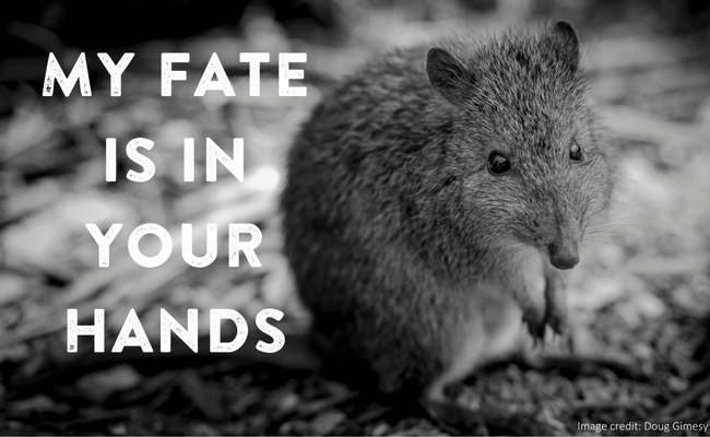 Potoroo_-_my_fate_final.png