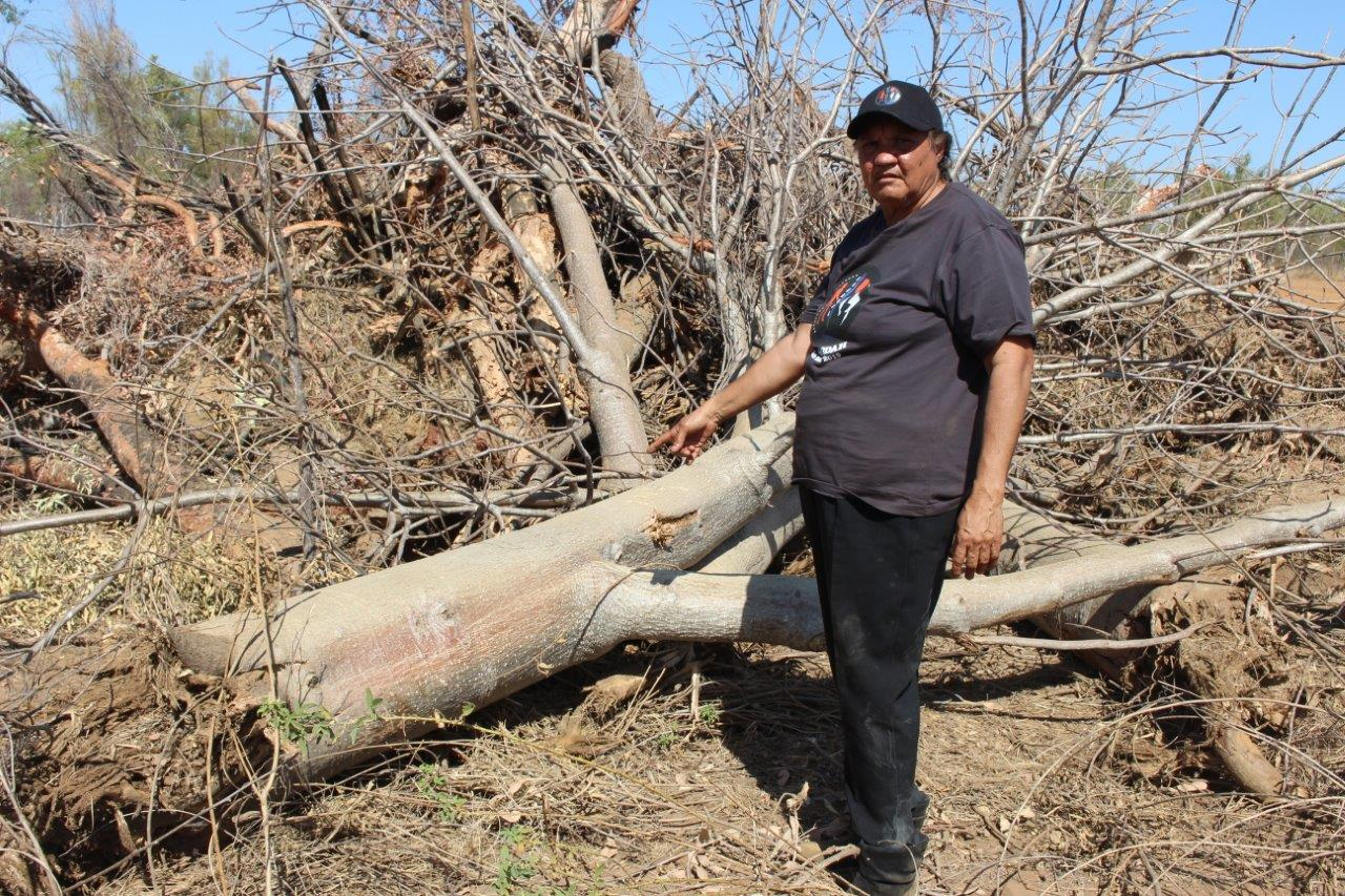Rosita Shaw with a destroyed Boab tree