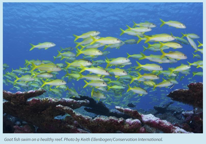 fish_oceans_five.PNG