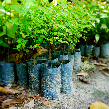 350x350reforestation023.jpg