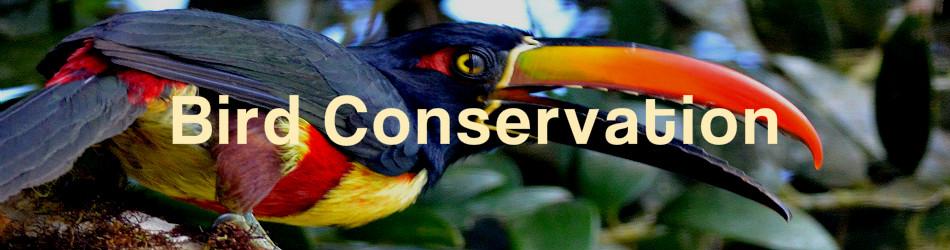 costa_rica_conservation_bird_001a_250.jpg