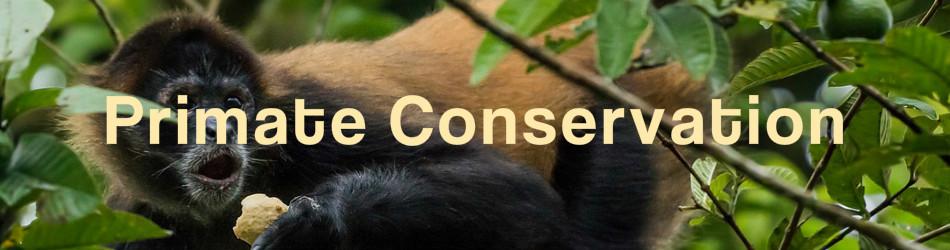 costa_rica_conservation_primate_001_250.jpg