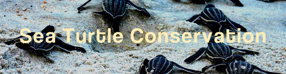_960_250_sea_turtle_conservation_volunteer_environment_002.jpg