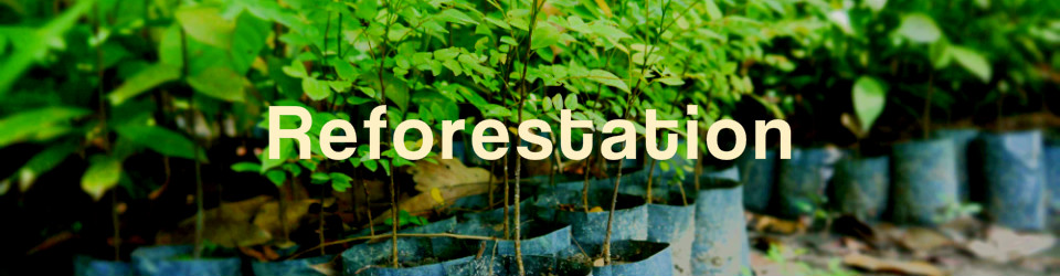 _960_250_reforestation_volunteer_environment_007.jpg