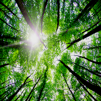 353x350_forest010.jpg