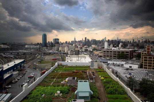 New_York_City_Urban_Agirculutre_Sustainability_Conservation_Environment_1.jpg