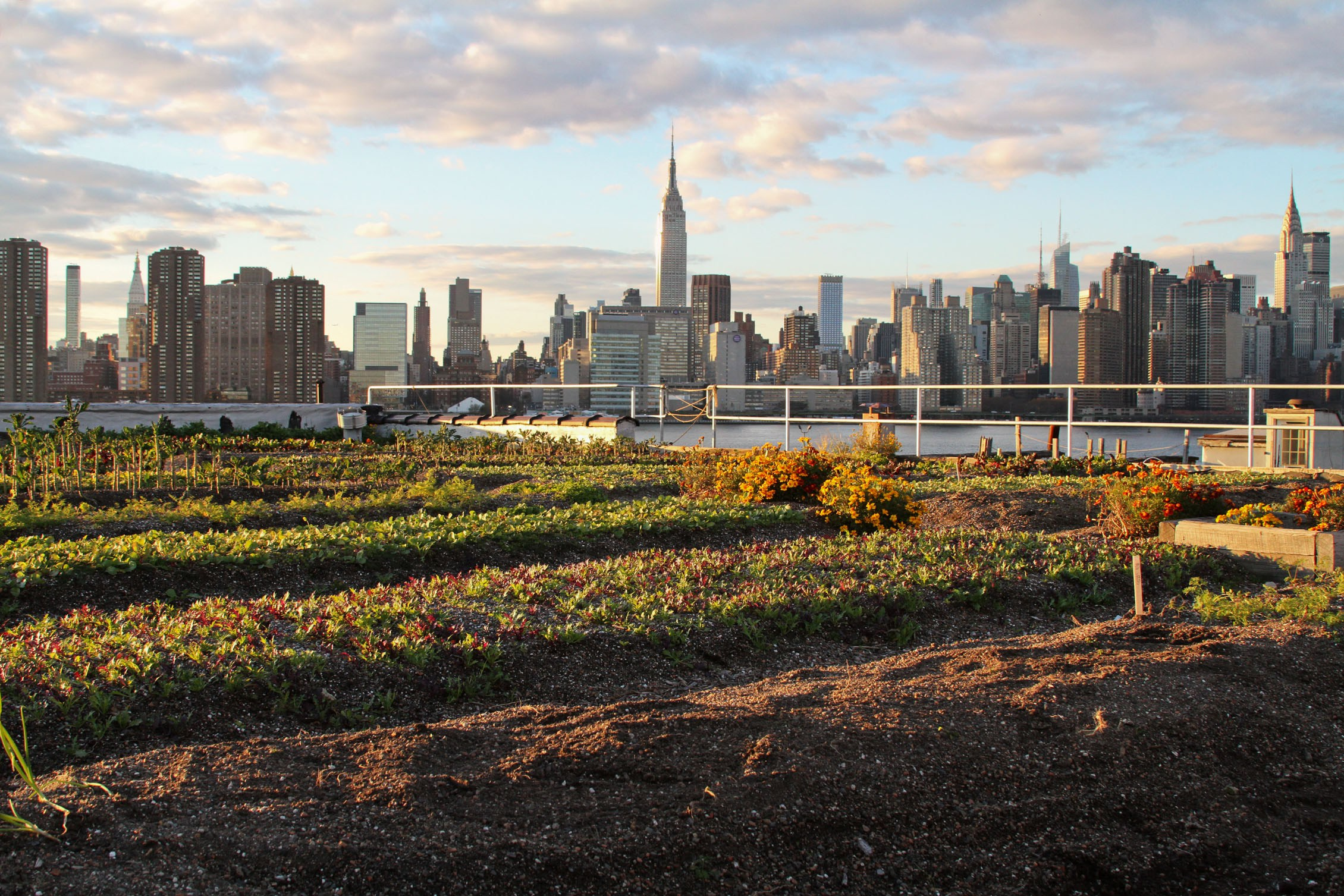 New_York_City_Urban_Agirculutre_Sustainability_Conservation_Environment_2.jpg