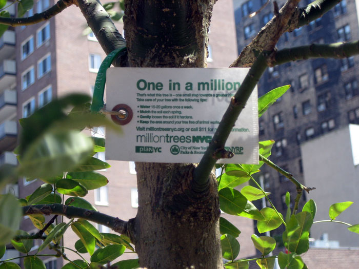 Urban_Reforestation_New_York_City_Trees_Environment_Sustainability_Eco_Preservation_Society_Nature_1_milliontreesnyc.jpg