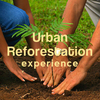 _nations_UrbanReforestation_experience002.jpg