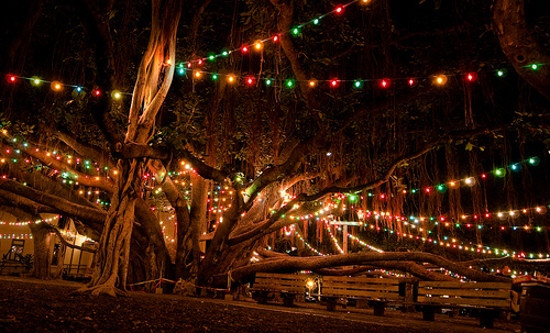 Lahaina Banyan Tree Lighting Ceremony