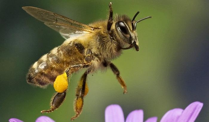 Bee-neonic-700x410.jpg
