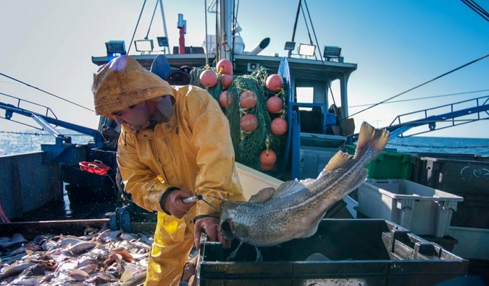 Fisherman-gutting-fish-700x410.jpg