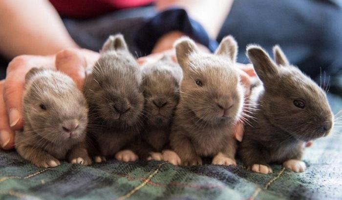Baby-Bunny-Rabbits-700x410.jpg