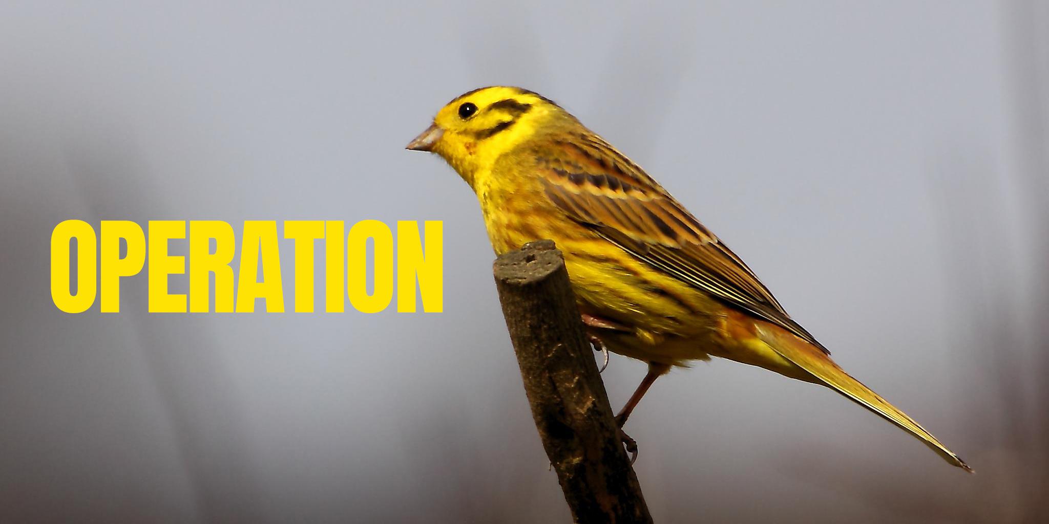 Bird or Document?