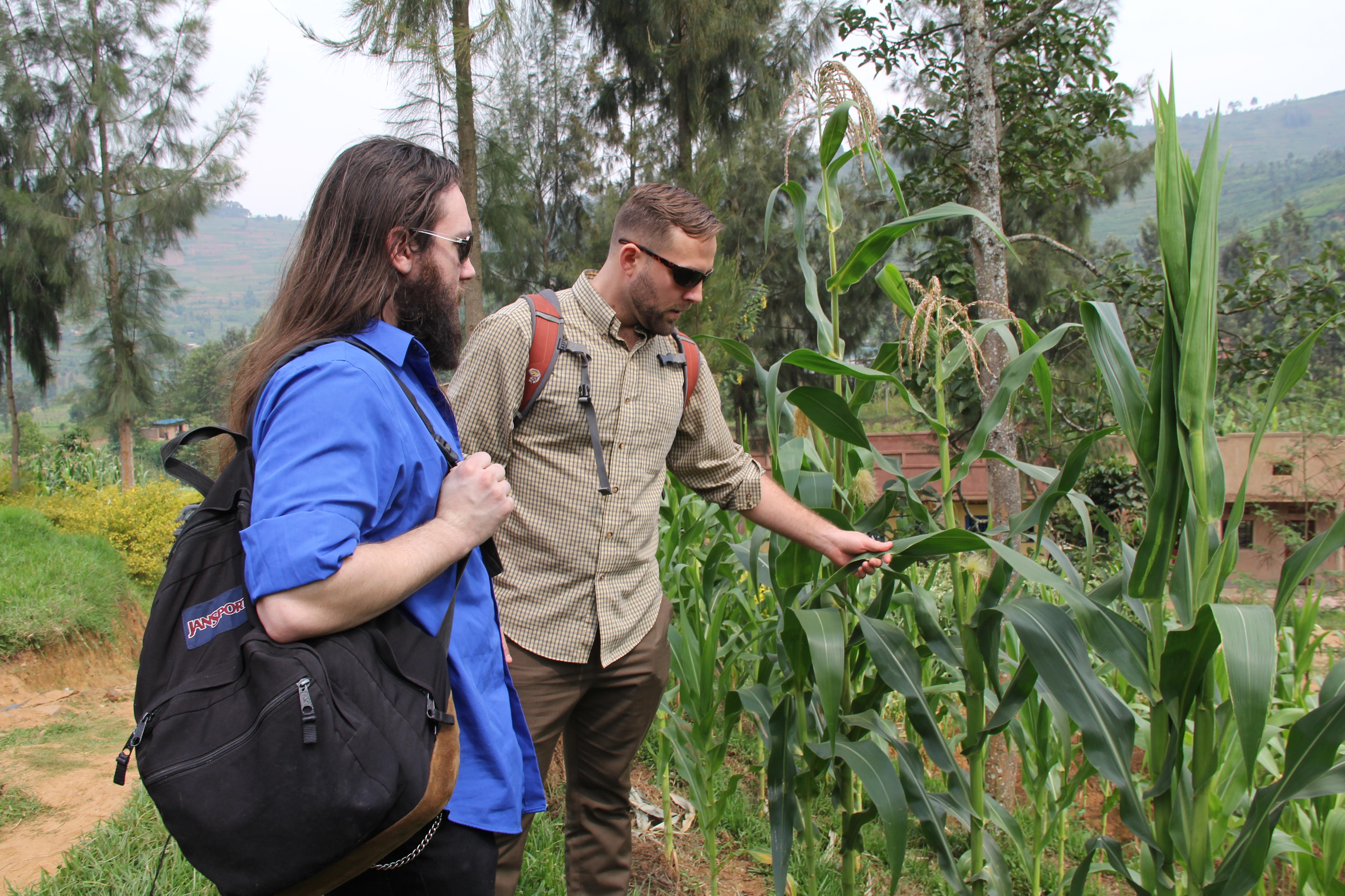 maize_growing_in_rubaya.JPG