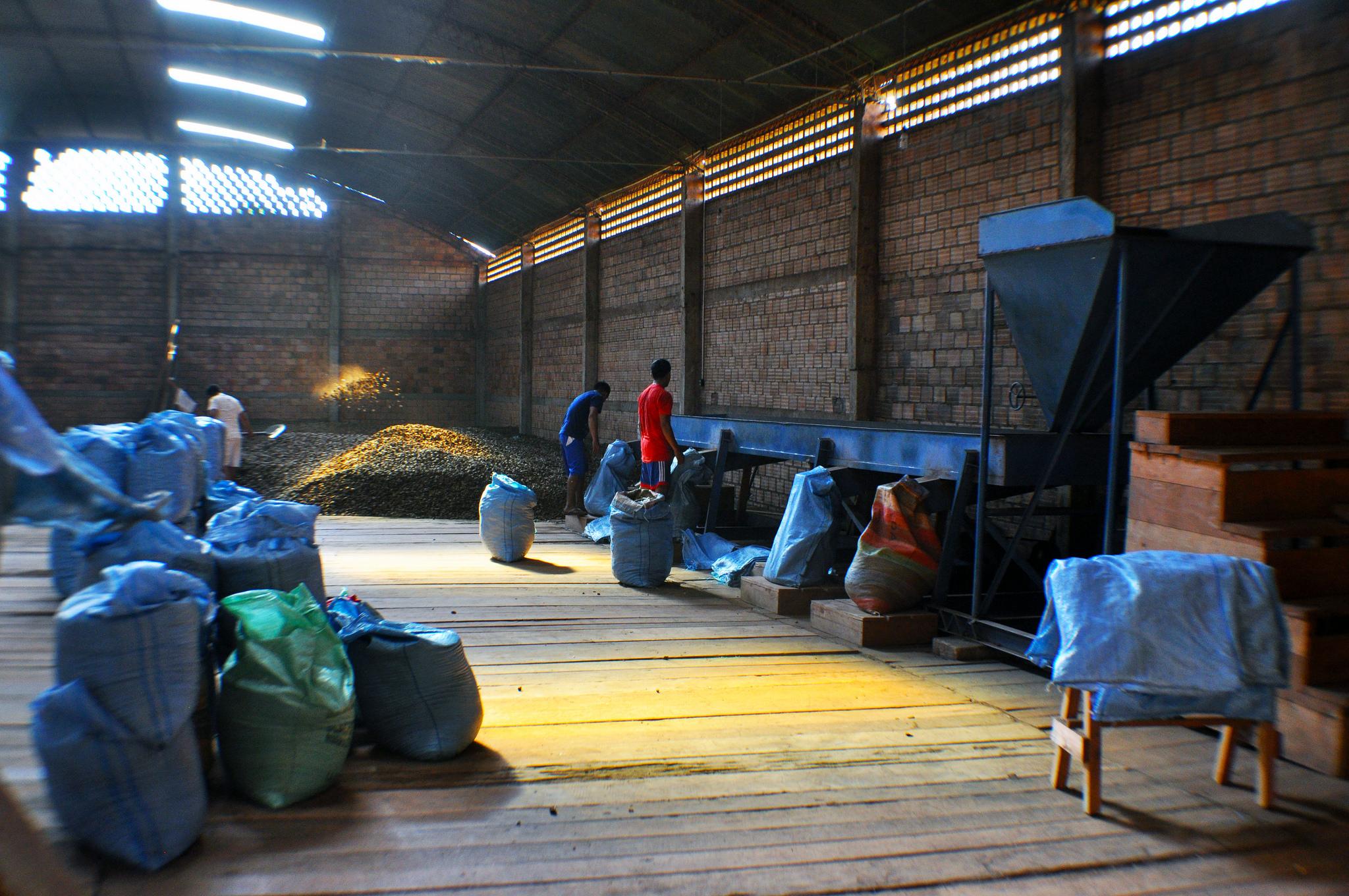 Brazil Nut Processing Plant