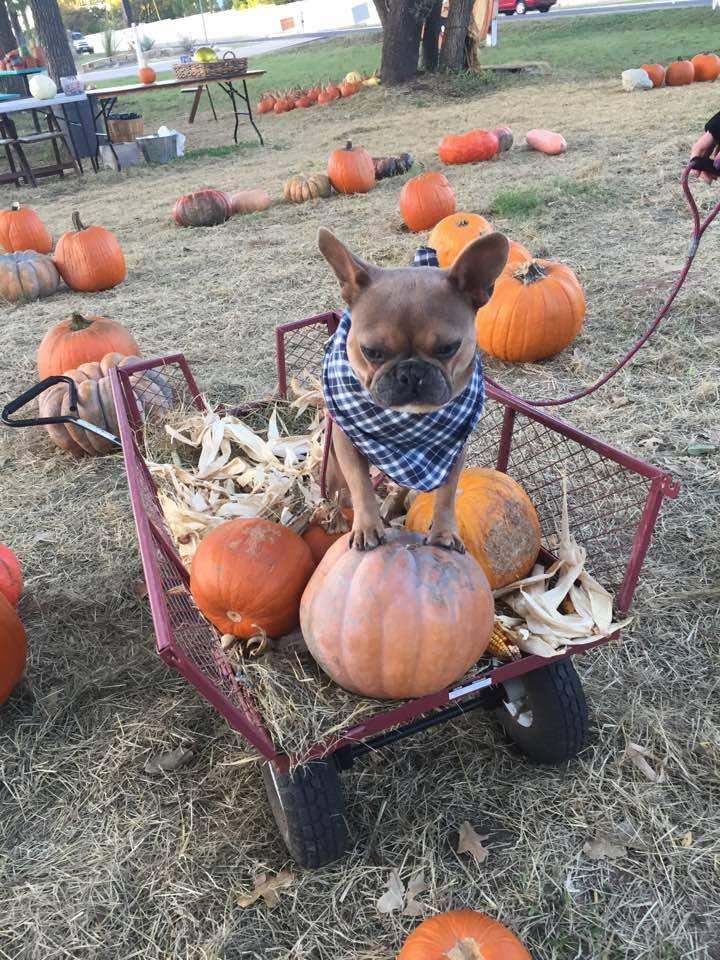 pumpkinsss.jpg