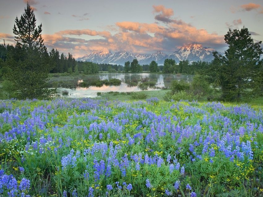 landscapes_nature_wyoming_grand_teton_national_park_national_park_wildflowers_1600x1200_wallpaper_www.wallpapername.com_9.jpg