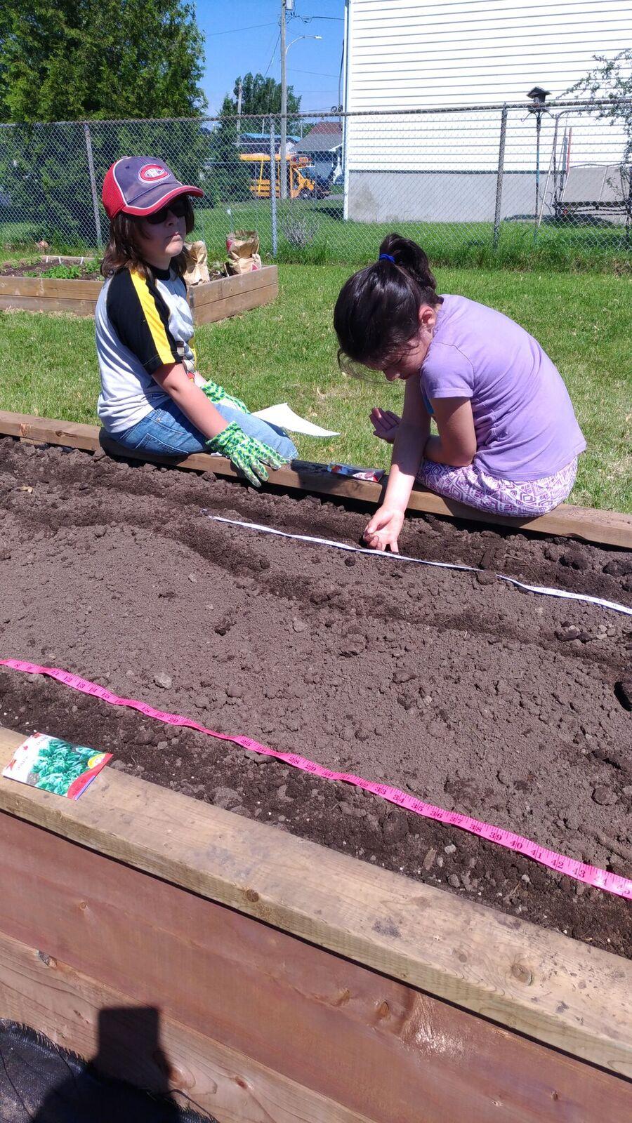 planter les graines