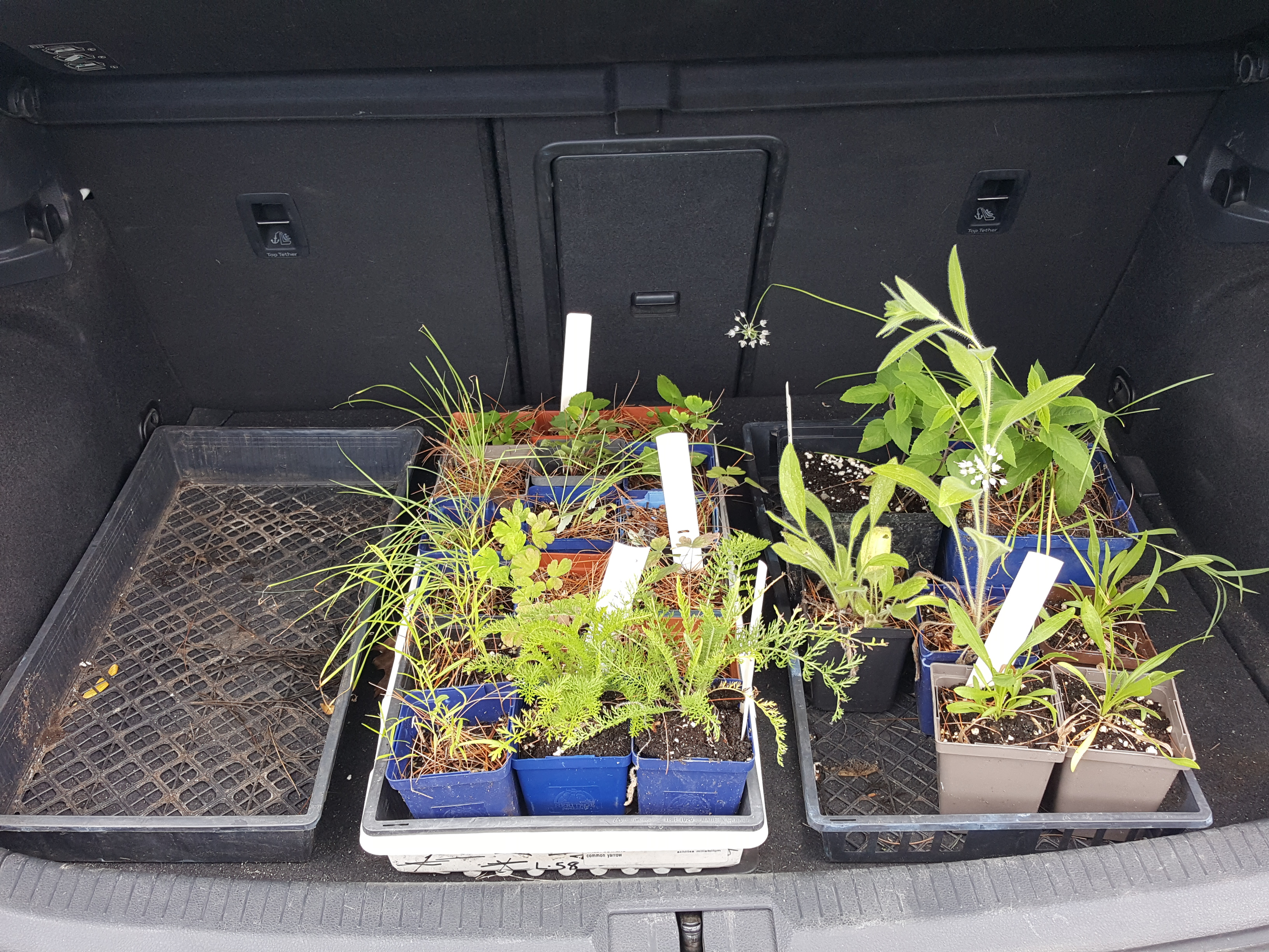 Native Pollinator Plants Being Transported to their New Location