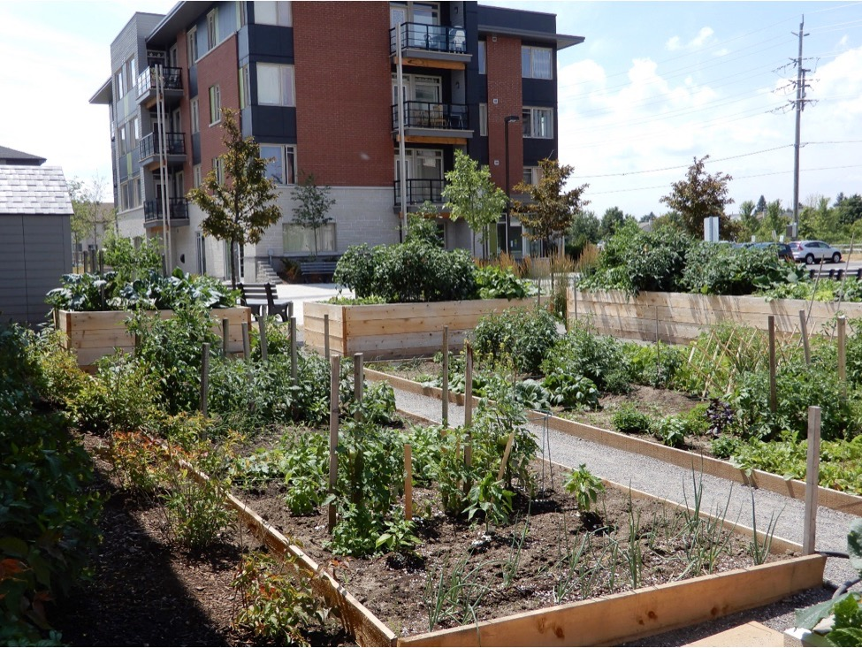 Community Garden in Local Development