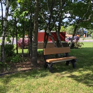 Garden Bench in the Shade