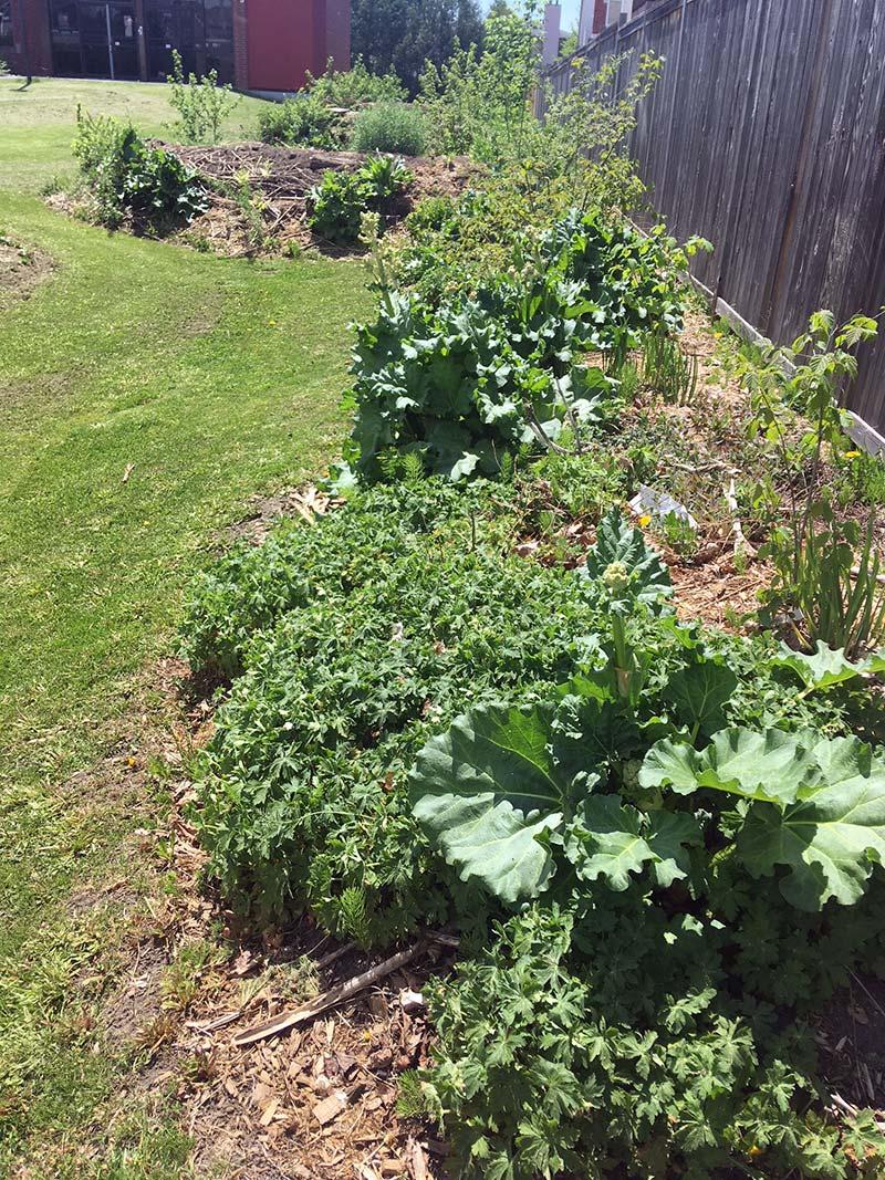Hugglekulture-Garden.jpg