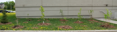 ForestBrookCommunityChurch-treesMay112013-128small