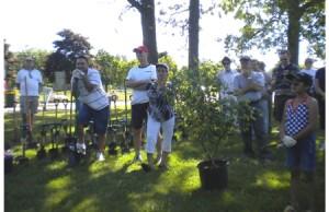 treeplantinglight