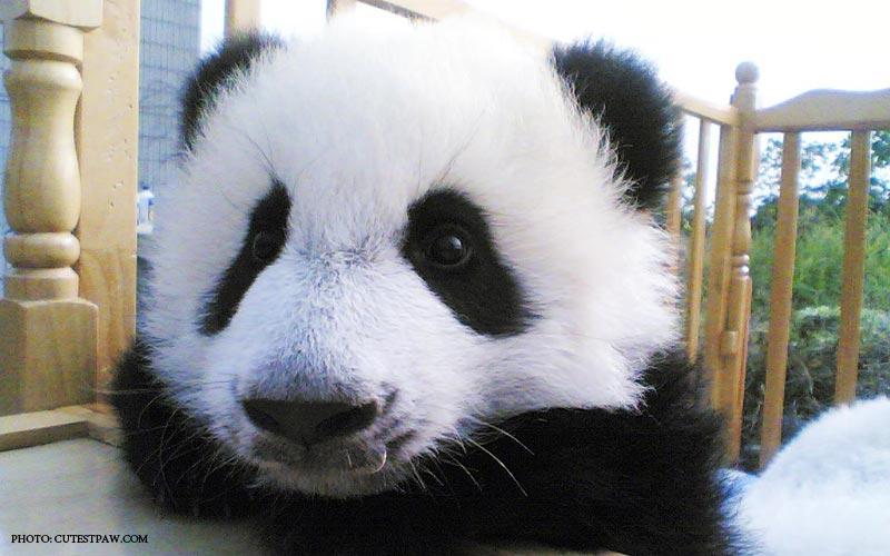 Baby_Panda_Hugger_2.jpg