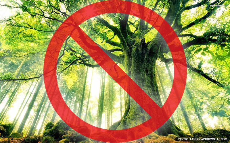 Racist_Trees.jpg