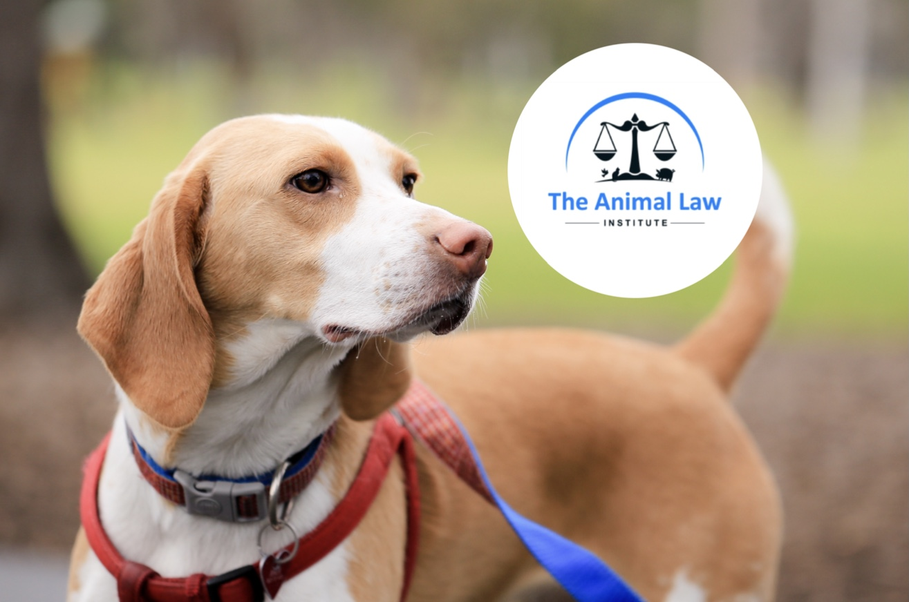 CLCs on the frontline: Animal Law Institute