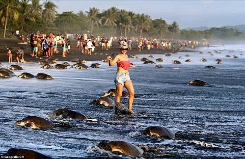sea_turtles.jpg