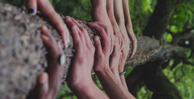 hands hold a tree