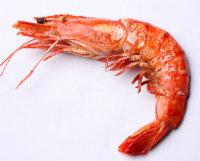 shrimp2.png