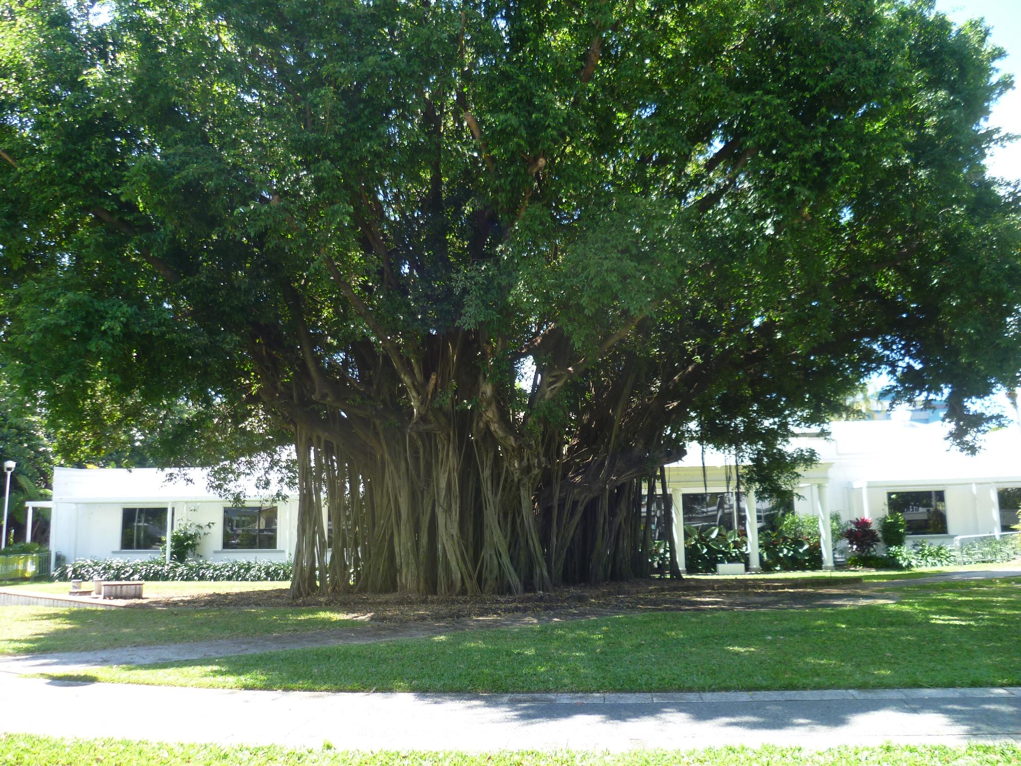 Nursery-Tree-79.jpg