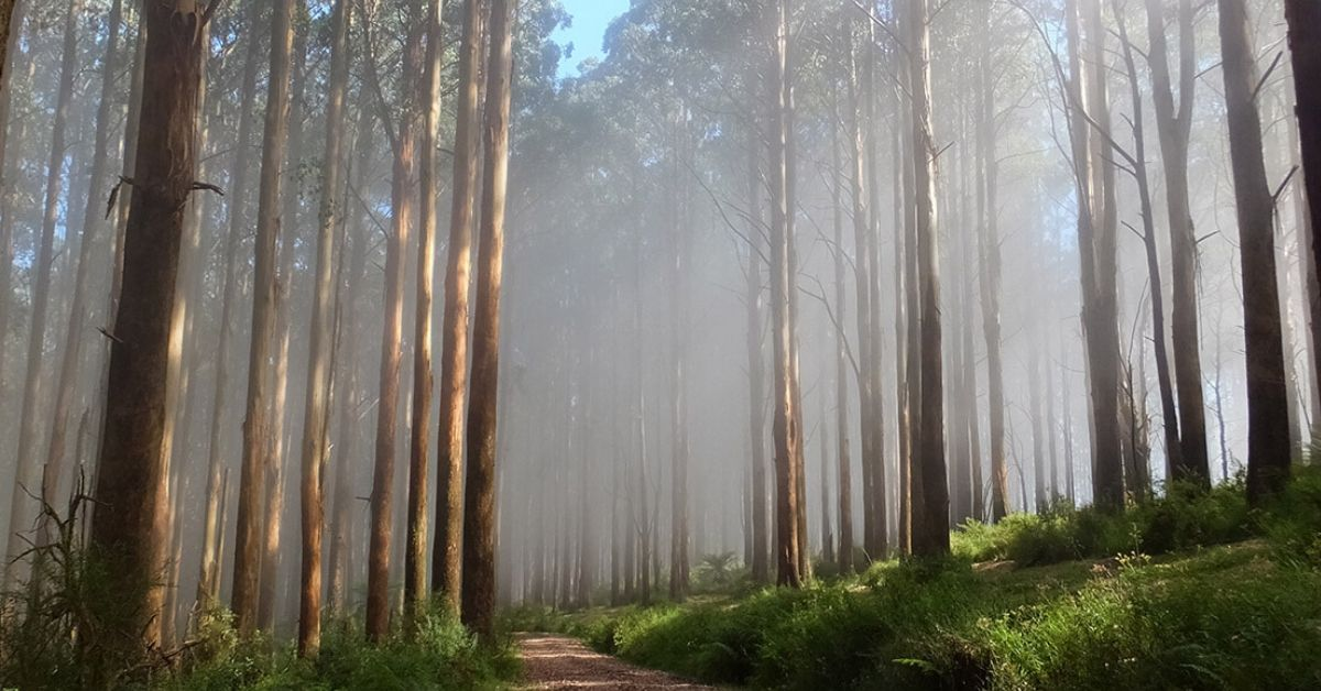 Breaking down the gov's announcement; What does this actually mean for Victoria's forests?