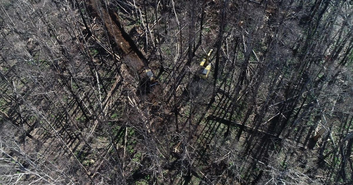 Victorian government to log thousands of hectares of fire damaged forests