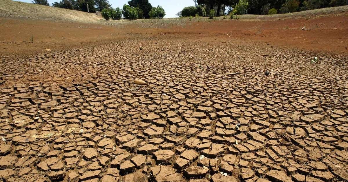 Drought affected areas increase bushfire risk